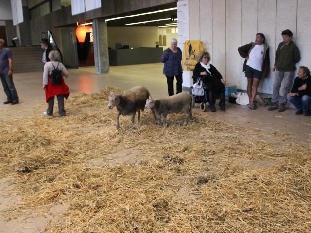 Grand Stade de l'OL : des moutons et de la paille au Grand Lyon !