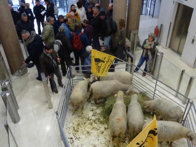 Attaques de loups : la DREAL à Lyon envahie par des paysans ce jeudi