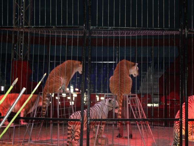 Lyon 2e : le cirque Pinder s'installe à Lyon jusqu'au 26 avril