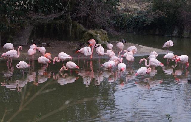 Les animaux du Parc de la Tête d'Or préservés du froid
