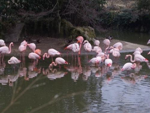 Grippe aviaire : l'Ain et le Parc des oiseaux sous tension