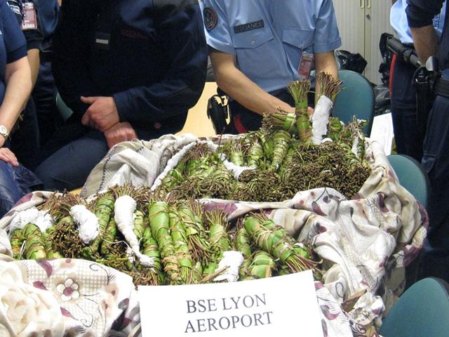 Intercepté à l'aéroport de Lyon Saint-Exupéry avec 30 kilos de khat