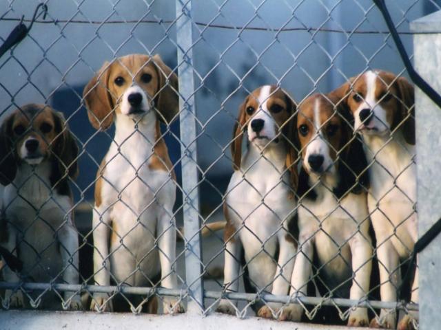 Lyon : une manifestation pour les animaux de laboratoire ce samedi