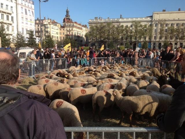 Une centaine d'agriculteurs à Lyon pour une transhumance urbaine