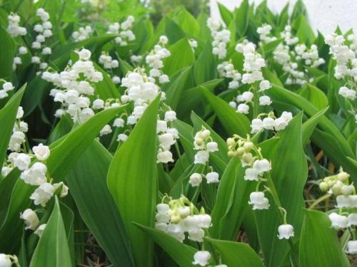 Près du quart de la flore rhônalpine est en danger