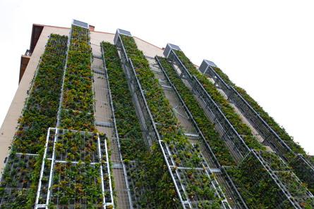 Les murs végétaux ont un effet sur la pollution