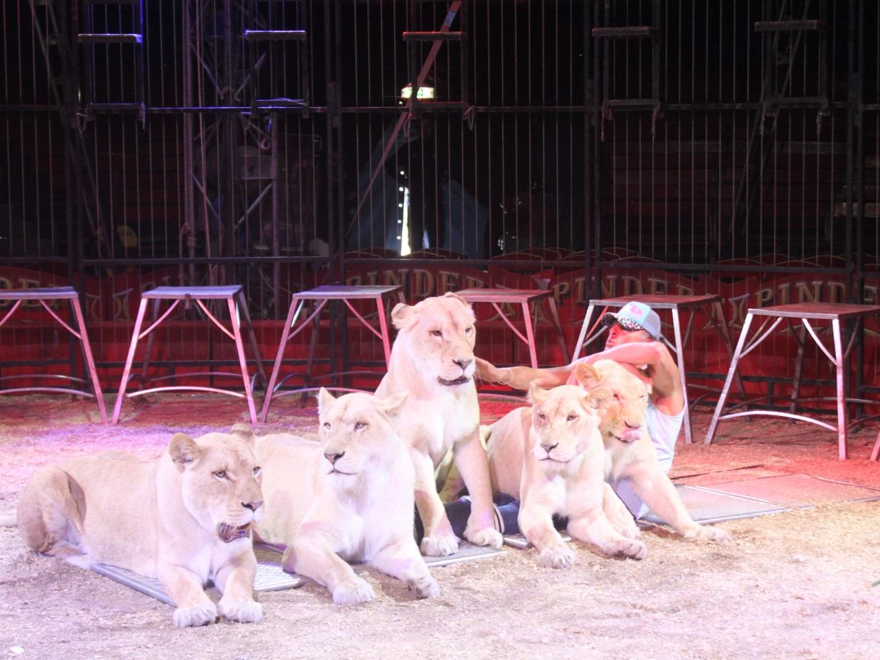 Les lions blancs - LyonMag.com