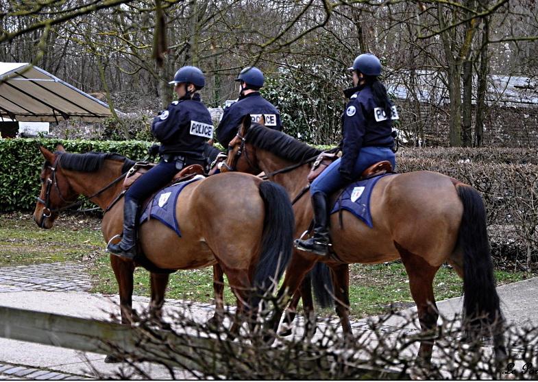 Une police montée à Lyon en 2012