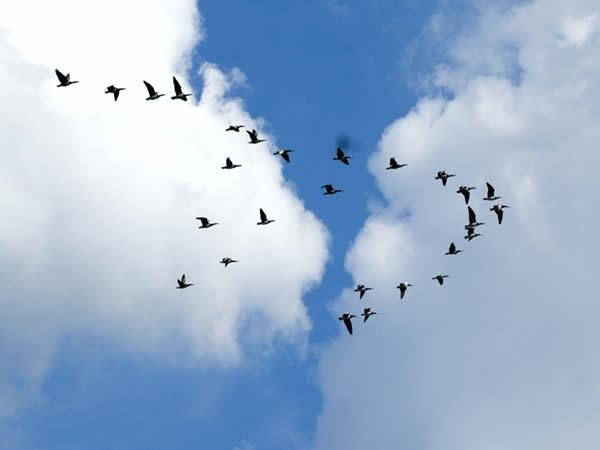 Rhône : un week-end pour observer la migration des oiseaux