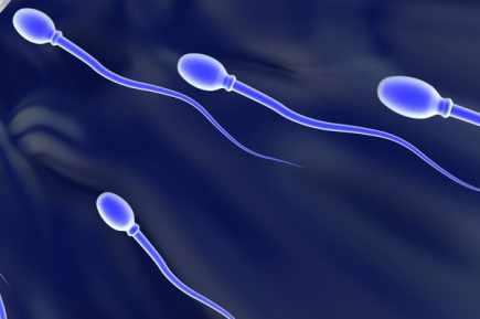 Une société lyonnaise annonce la première création de spermatozoïdes in vitro
