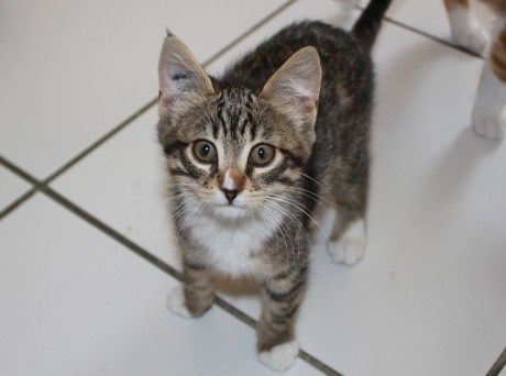 Un prétendant à l'adoption -LyonMag