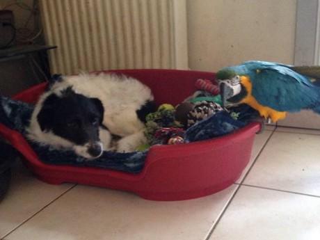La chienne dans sa famille d'accueil - DR Croc Blanc