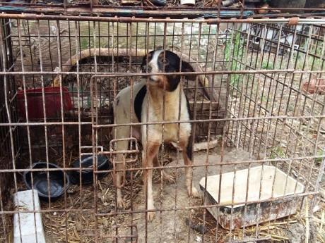 Un chien sauvé par la SPA à Givors - DR SPA