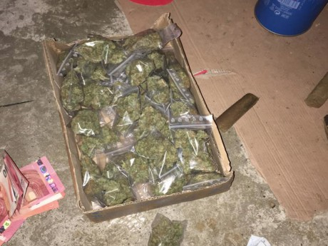 Le cannabis retrouvé mardi au Tonkin - DR