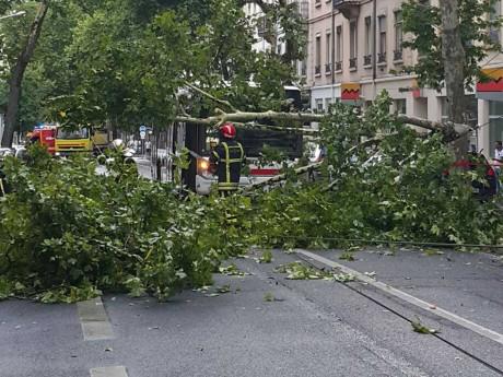 Un arbre bloque le bus avenue Félix Faure à Lyon ce lundi - LyonMag