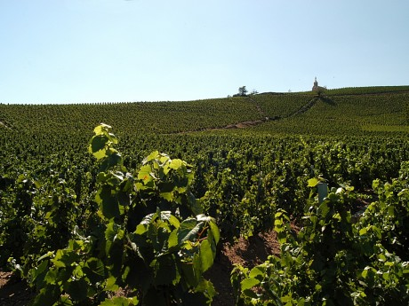 Le drame s'est déroulé dans les vignes - LyonMag