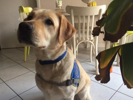 Un chien-guide - LyonMag