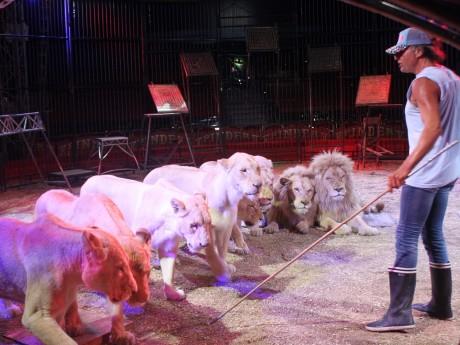 Le cirque Pinder avec des lions - LyonMag