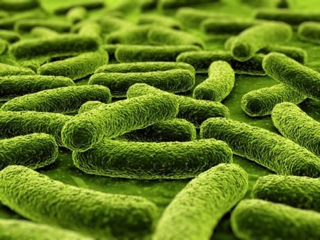 Bactéries - DR