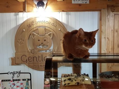 Neuf chats seront présents lors de ce CatEscape