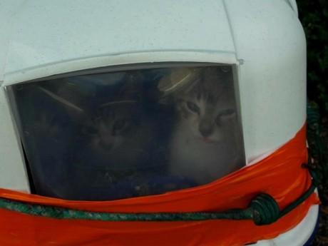 Les chats étaient abandonnés dans une litière, dont la porte avait été entravée - DR
