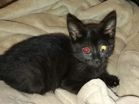 Le chaton blessé - DR DDF Sans croquettes fixes