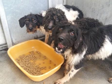 Trois des chiens retrouvés en mars - DR