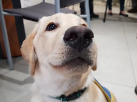 Les chiens guides d'aveugles de Lyon à l'honneur ce dimanche - LyonMag