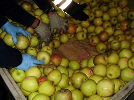 Les valises cachées sous les fruits - DR Douane de Lyon