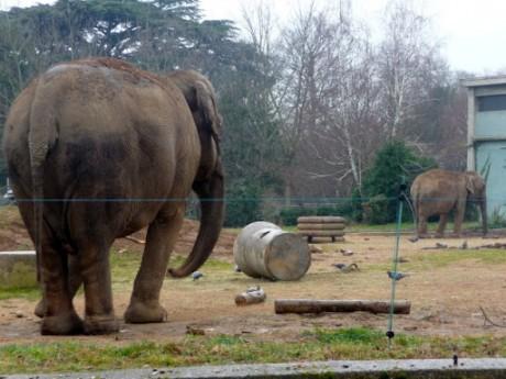 Les éléphants Baby et Népal - LyonMag