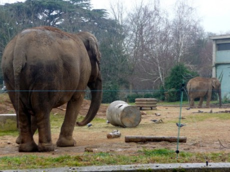Baby et Népal, les deux éléphants du parc de la Tête d'Or - LyonMag.com
