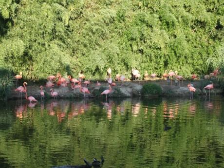 Les flamants roses du parc des oiseaux - LyonMag