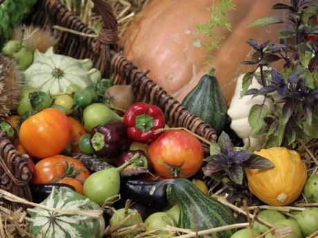 Des légumes cultivés au parc de Lacroix-Laval - LyonMag