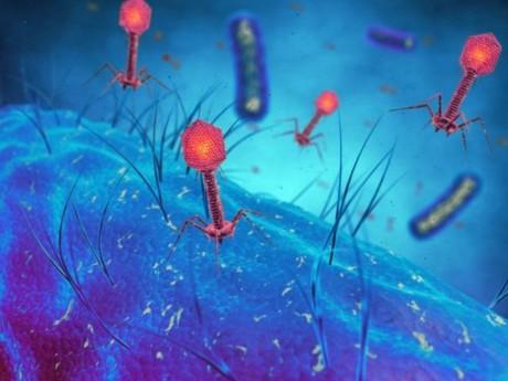 Les phages sont des virus prédateurs - DR