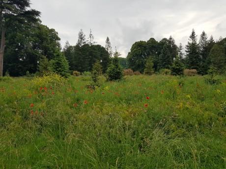 Le parc de la Tête d'Or lors de sa réouverture après le confinement - LyonMag