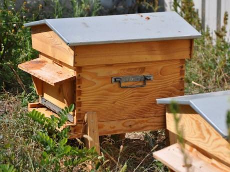 L'un des ruches urbaines à Lyon - LyonMag