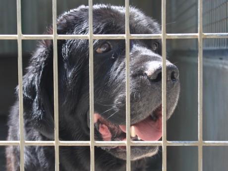 49 chiens se trouvent à la SPA de Lyon-Marennes - LyonMag