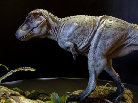 Un Tarbosaurus - DR