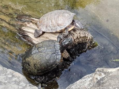 Le centre de récupération des tortues de Floride au parc de la Tête d'Or - LyonMag