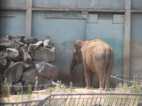L'affaire des éléphants de Lyon s'est finalement bien terminée - LyonMag