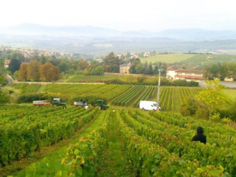 Les vignes du Beaujolais - Photo Lyonmag.com/DR