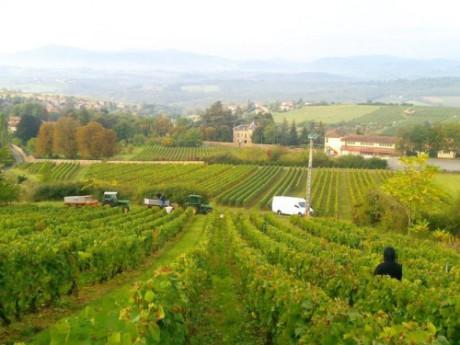 Le vignoble a bénéficié du plus fort ensoleillement depuis 1992 - LyonMag