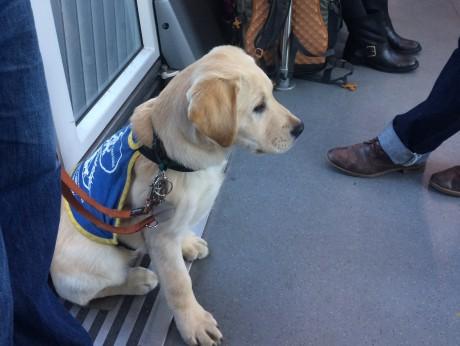 Norton dans le tram avec sa famille d'accueil – DR