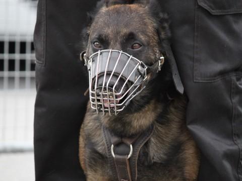 Un chien policier - LyonMag
