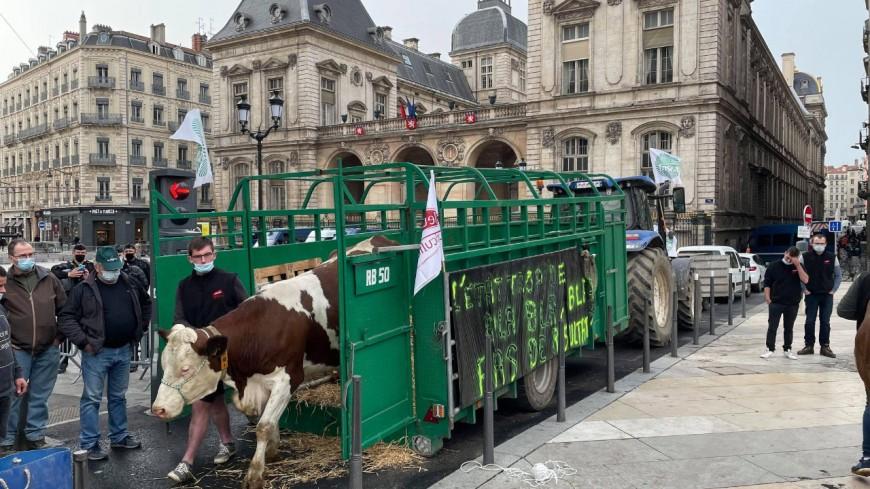 Lyon : agriculteurs, tracteurs, chevreaux et vaches devant la mairie pour dénoncer les menus sans viande