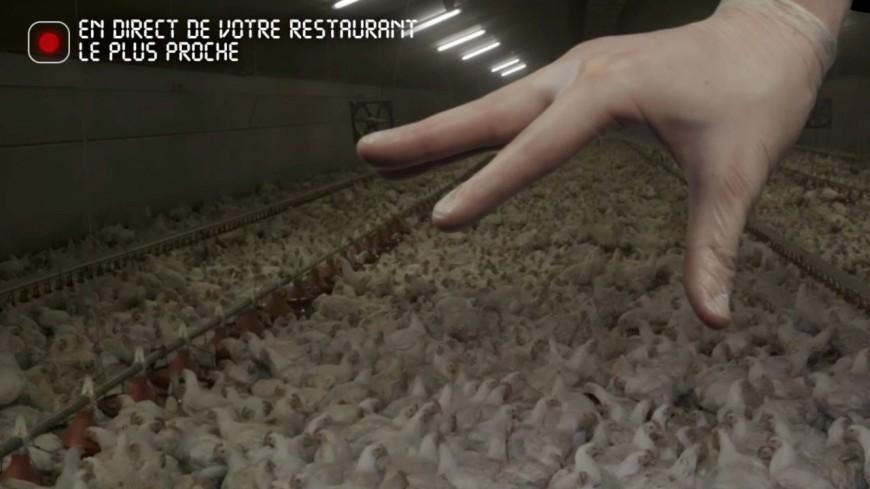 Lyon : L214 appelle à manifester ce samedi devant les restaurants Subway pour dénoncer les conditions d'élevage des poulets