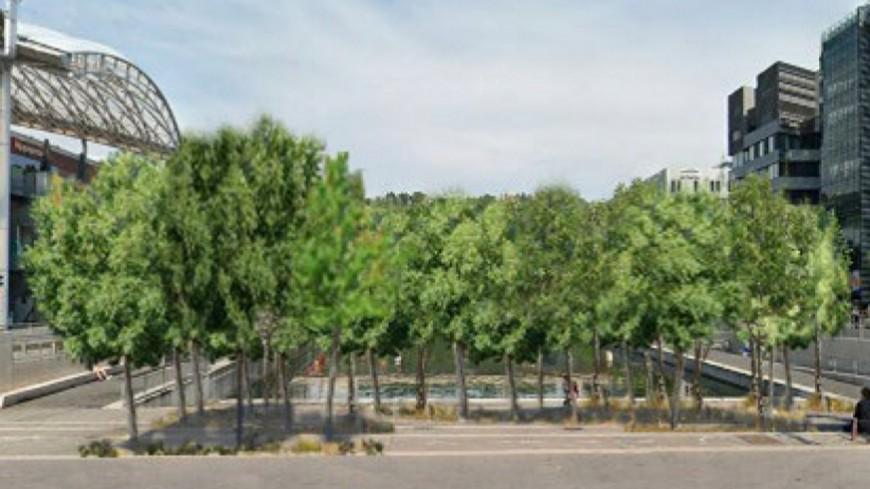 Piétonnisation du cours Charlemagne : 46 arbres plantés par la Métropole de Lyon