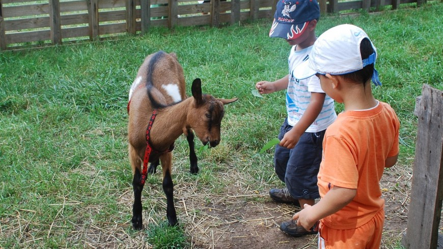 La Ville de Lyon va aider au lancement d'une première ferme pédagogique à la Croix-Rousse