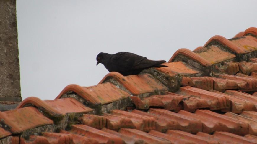 Lyon : depuis son balcon, il abattait des oiseaux à la carabine
