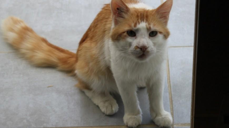 Pour aider à la stérilisation et l'identification des chats, la SPA de Lyon propose un coup de pouce financier